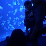 Foto di Shanghai Ocean Aquarium