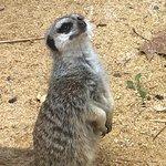 Zdjęcie Lisbon Zoo