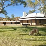 The Alice Springs Telegraph Station, with special early morning guest!