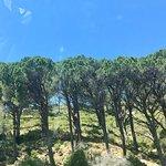 Signal Hill Foto