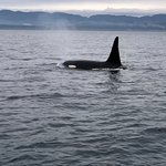 Photo de SpringTide Whale Watching & Charters