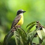 Birding Spots Manuel Antonio