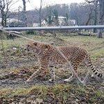 Фотография Зоопарк Шёнбрунн