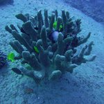 Billede af Reef Pirates Diving