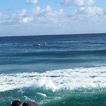 Photo of Kirra Beach