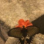 Bild från The Butterfly Palace