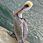 Foto de Sailfish Marina & Resort