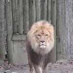 Foto de Bronx Zoo