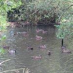 Photo of Otorohanga Kiwi House & Native Bird Park