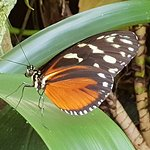 Photo of Butterfly Rainforest