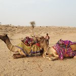 Photo of Renuka Camel Safari