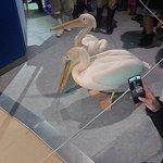 小樽水族館照片