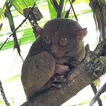 眼镜猴保护区照片