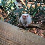 Photo of Haus des Meeres - Aqua Terra Zoo
