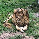 Billede af Jukani Wildlife Sanctuary