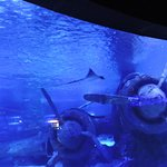 Billede af Antalya Aquarium