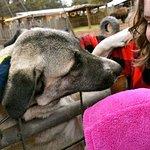 Foto di Grand Canyon Deer Farm