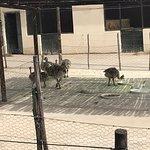 Photo of Highgate Ostrich Show Farm