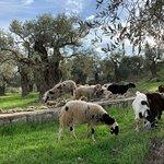 Foto de Green Olive Tours