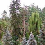 Photo of Batumi Botanical Gardens