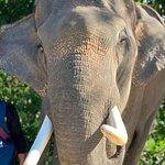Photo of Elephant Retirement Park Phuket