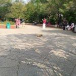 Photo de Bharati Government Park