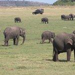 Photo of Kaudulla National Park