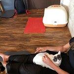 Foto de Cat 'n' A Cup Cat Cafe