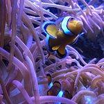 Blue Planet Aquarium fényképe
