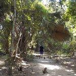 Foto de Parque Forestal de Bijilo
