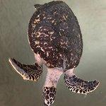 Bild från Kosgoda Sea Turtle Conservation Project