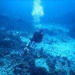 Big Island Divers Foto