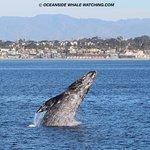 ดูโลมาและวาฬ