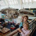 Foto de Museu de História Natural