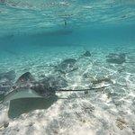 Photo of Lagoon Service Bora Bora