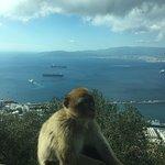 Billede af Gibraltar Rock Private Tours