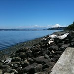 A view of Commencement Bay from Point Defiance