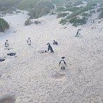 Φωτογραφία: Boulders Beach