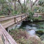 Boardwalk over natural springs