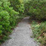 a well made 2km path around the top of the Nut
