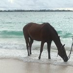 Horses Love the Beach too!  Pleasant surprise during morning walk along beach