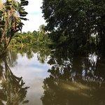 Landscape - Sepilok Jungle Resort Photo