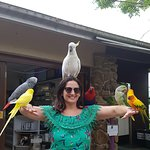 Maleny birds at reception entrance(before you even get to aviary)