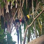 Pacuare Lodge ภาพถ่าย