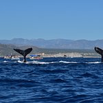 Whale Watch Cabo Foto