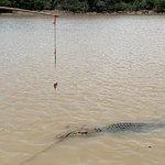 Photo of Spectacular Jumping Crocodile Cruise