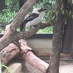 론 파인 코알라 보호 구역의 사진