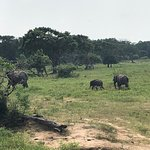 Photo of Sudu Yala Tusker Safari