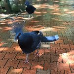Photo de Kuala Lumpur Bird Park