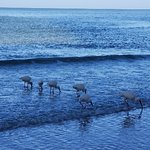 Photo de Tigertail Beach